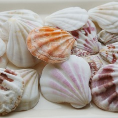 Beach Theme Shell Decorative Accessories  (131036844)